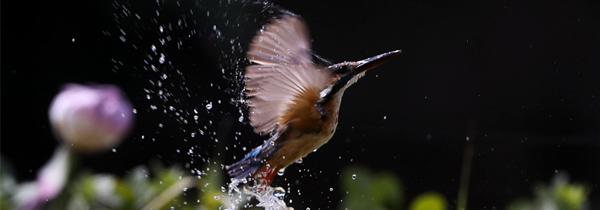 拍鸟那些事 生态大神教你如何捕捉灵动瞬间
