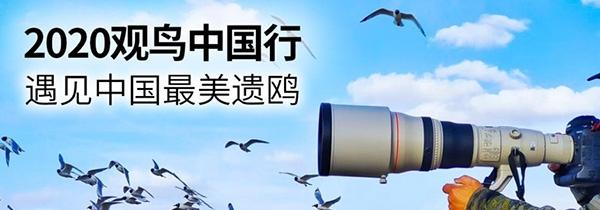 EOS寻影康保 遇见中国最美遗鸥