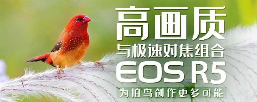 高画质与极速对焦组合EOS R5为拍鸟创作更多可能