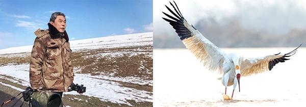 凡人阿衡:鸟类那令人着迷的翩跹舞姿