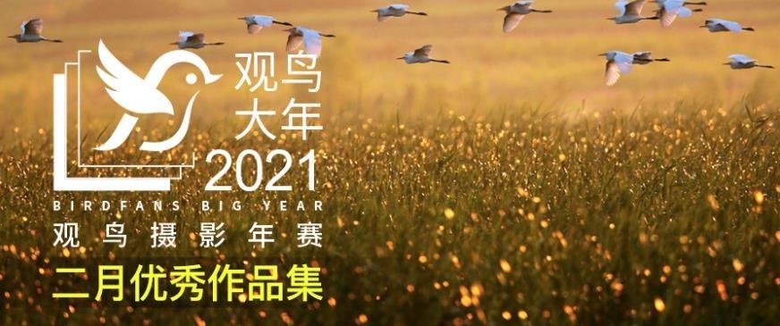 2021观鸟大年二月优秀作品集
