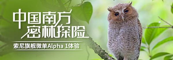 中国南方密林探险 索尼微单旗舰Alpha 1体验