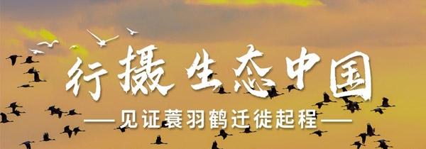 行摄生态中国 见证蓑羽鹤迁徙起程